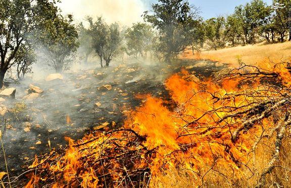 آتش افروزی جنگلها تایید شد