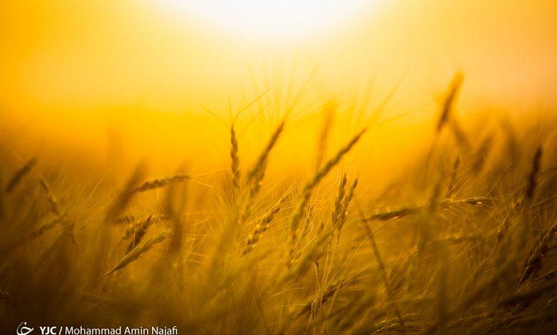 دولت در قبال خرید تضمینی محصولات کشاورزی چه تعهداتی دارد؟