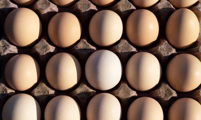 آن چه در نتیجه مصرف روزانه تخم مرغ رخ میدهد